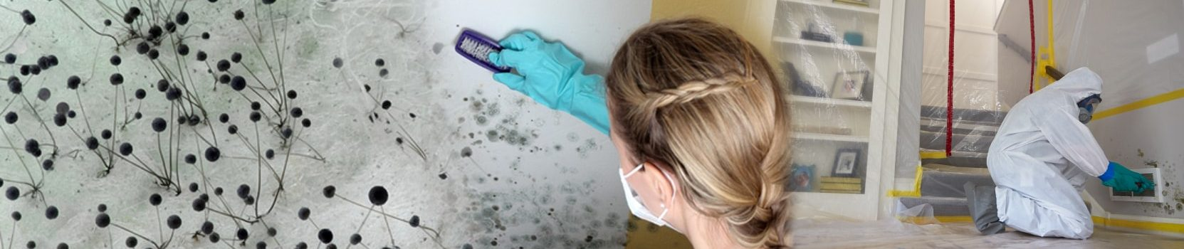 mold-remediation-smfireandwater-restoration-denver