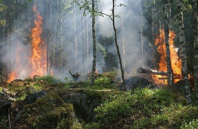 What-Causes-Forest-Fire-To-Burn-Intensely