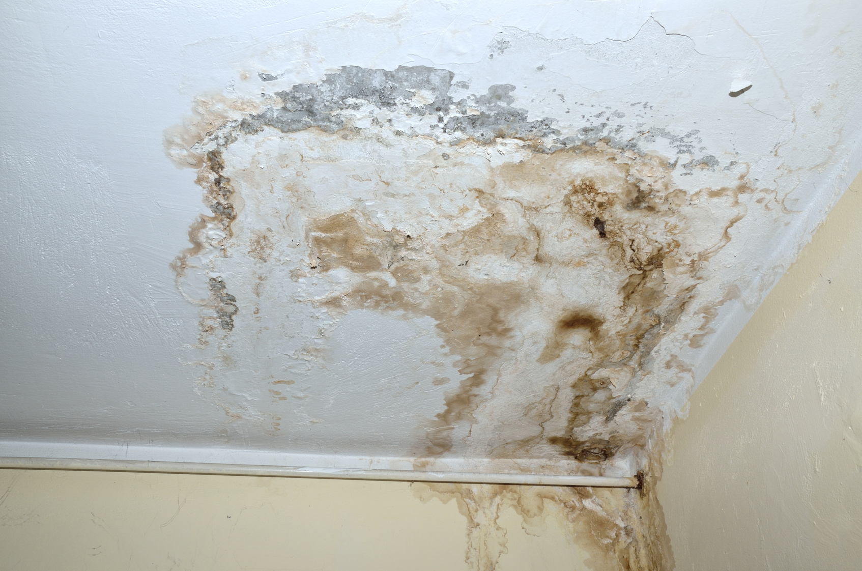 The-Main-Causes-of-Mold-in-Your-Home
