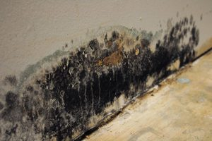 Mold Remediation – Commerce City, CO