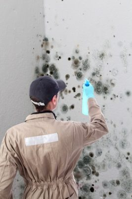 Clean The Affected Walls